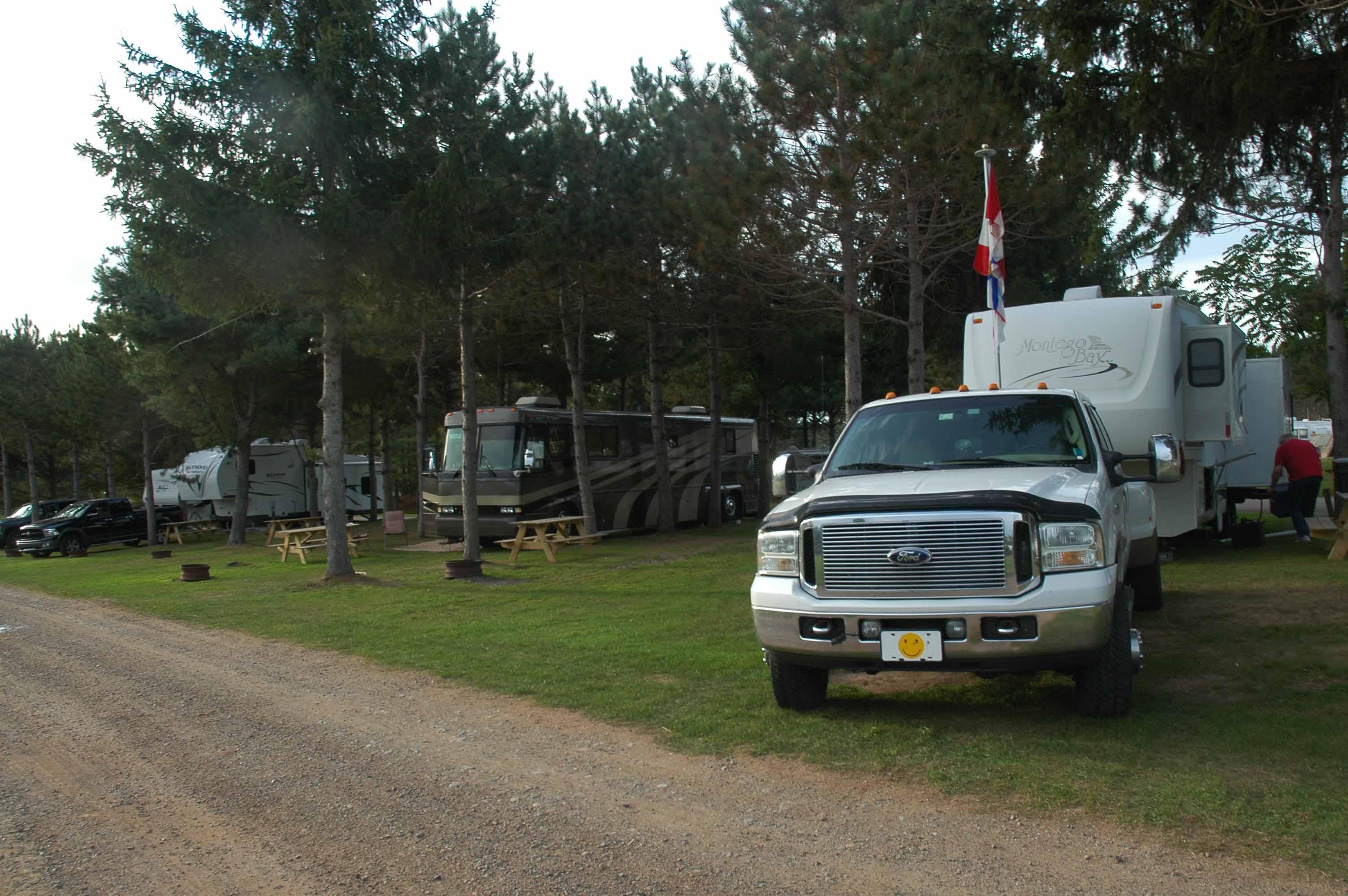 Scotia Pine 3